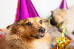 July Pooch Party