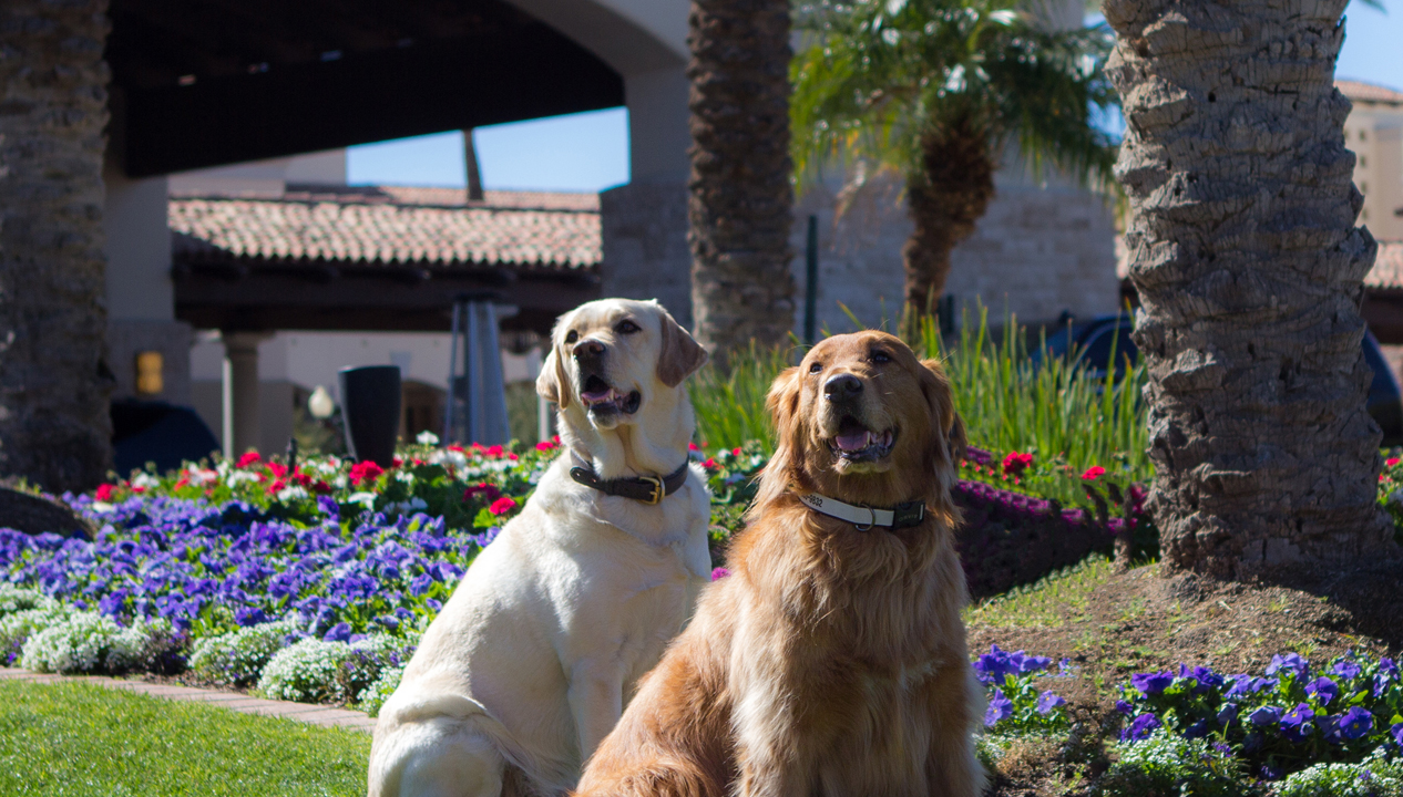 Spring Break at the Fairmont Scottsdale Princess